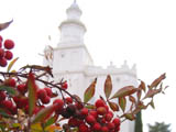 St. George Temple in Winter